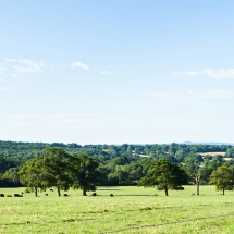Grange-View